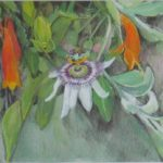 The Passion Fruit Flower
