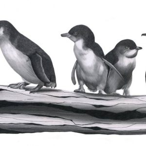 little-penguin-print