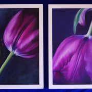 purple_tulips_framed