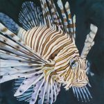 Lionfish – Limited Edition Print – Allure