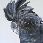 Jato – black cockatoo Limited Edition Print