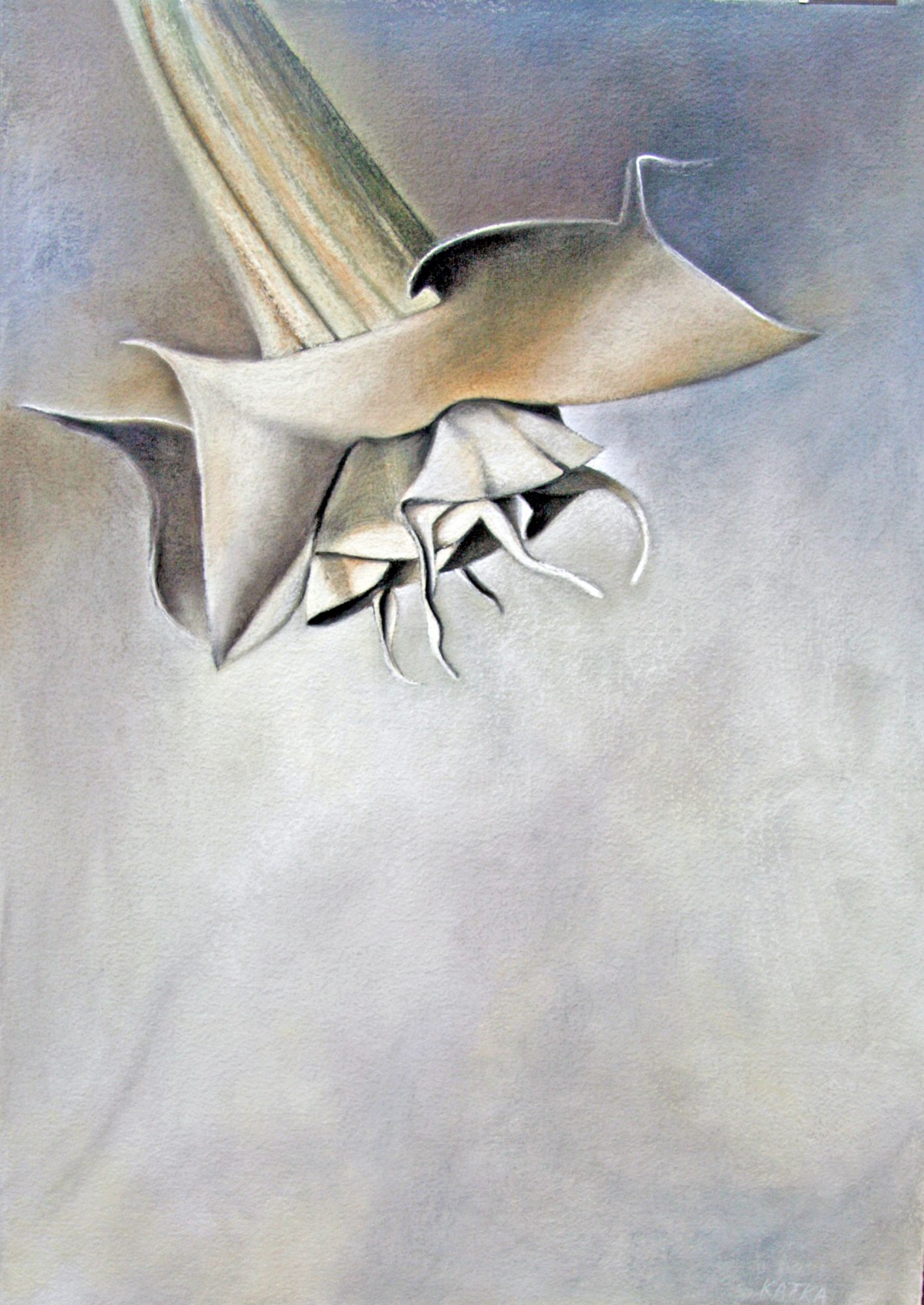 angels-trumpet-original-2018