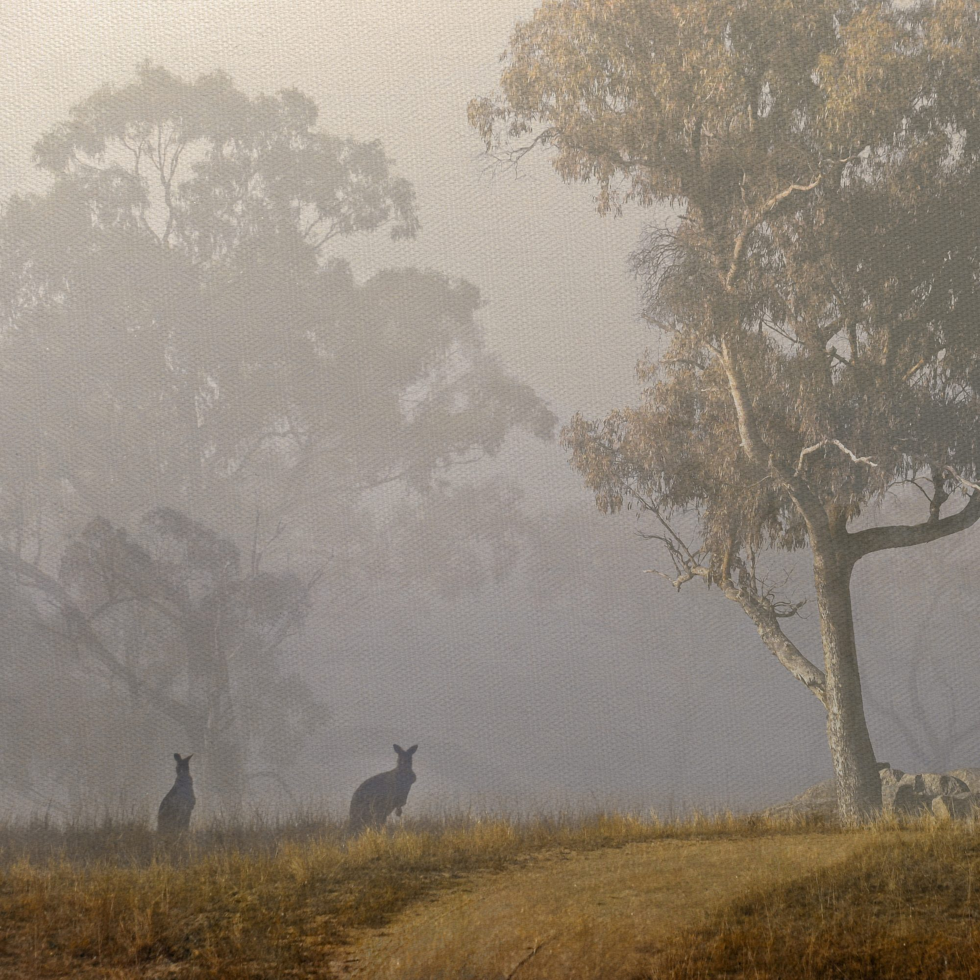 pcf1296sq-kangaroos-in-the-mist-etsy