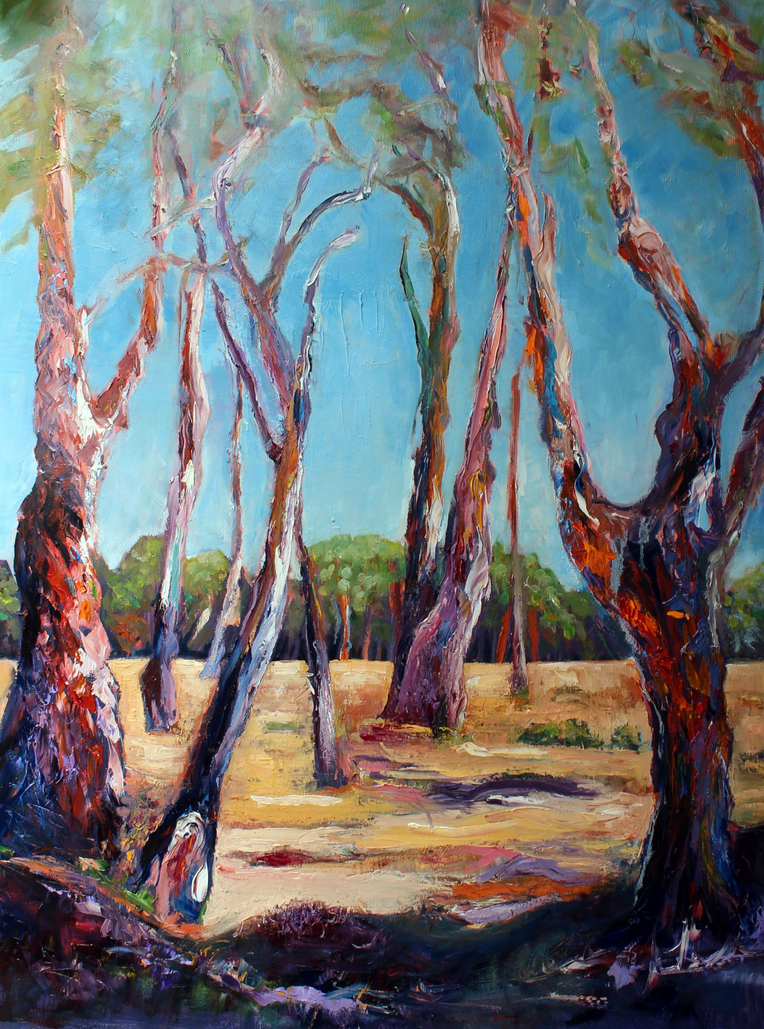 gum-trees-of-the-mid-north