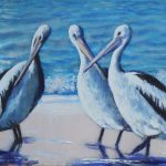 A Meeting – Pelicans