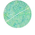 Reticulate leaf venation Ltd Ed Print