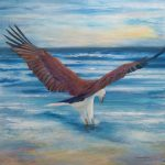 Fishing – White bellied Sea Eagle