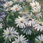 YOUNG AND UNTAMED – White African Daisies