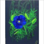 Giant Blue Poppy