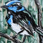 Fairy Wren – Quick Study