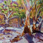 FLINDERS RANGES GUM TREES