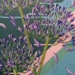 LAY LOW AIM HIGH – Agapanthus