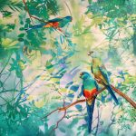Ltd Ed Canvas Print Whispers - Mulga Parrots