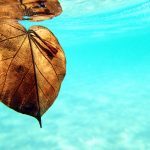 Leaf Currumbin Creek – Ltd Ed Framed – The Australian Beach Photography Series