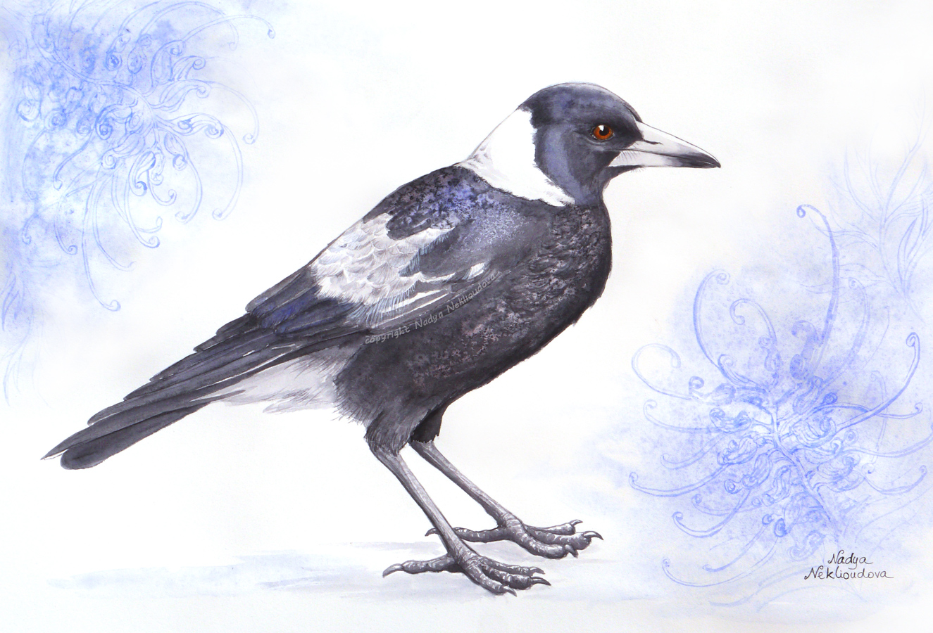 Magpie Fromjpg Copyright