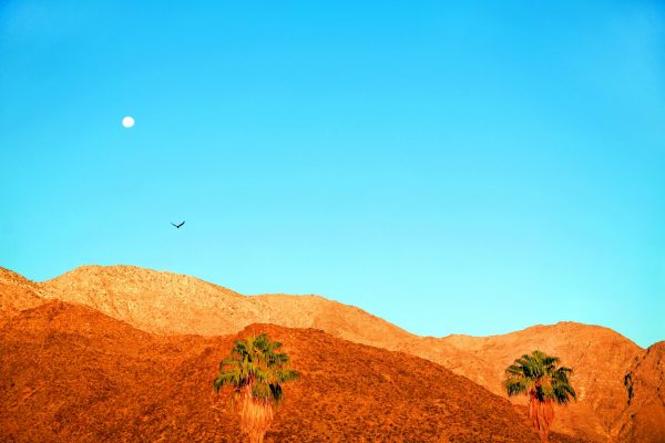 Palm Springs Bird & Moon