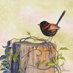 Sunset Dancer – Red-backed Fairywren