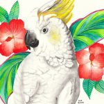 Cockatoo With Hibiscus