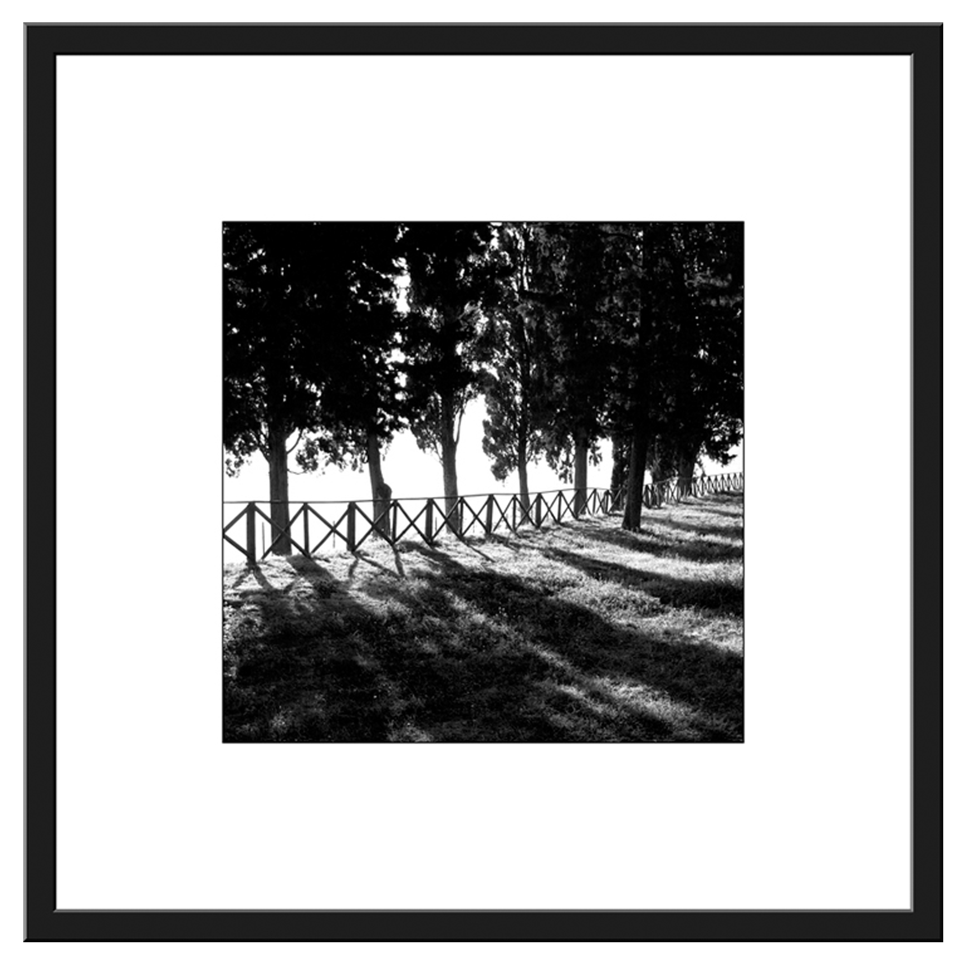 Pcb1452sq The Cypress Trees Framed Border