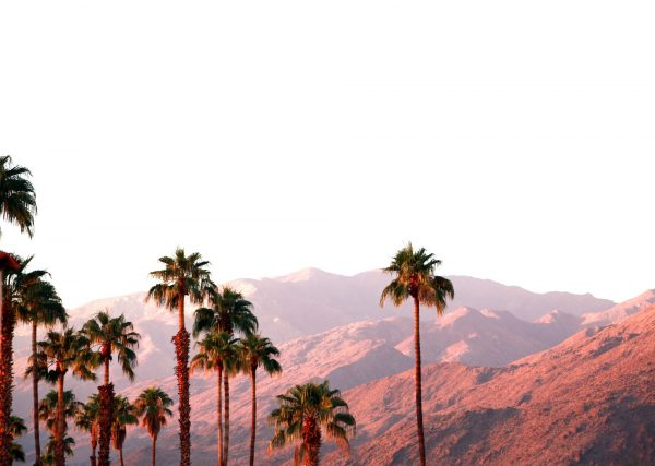 Palms Springs Landscape