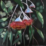 Gumnut Blossoms – Australian Native Flora